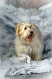 Terrier del meticcio Fotografia Stock