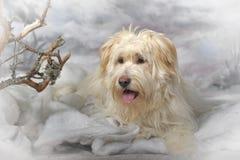 Terrier del meticcio Fotografie Stock Libere da Diritti