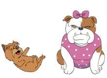 Terrier, der über der Bulldogge sich lustig macht Lizenzfreie Stockfotografie