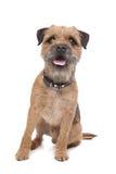 Terrier di bordo Immagini Stock