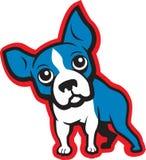 Terrier di Boston Fotografie Stock