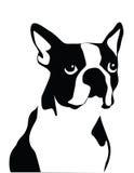 Terrier di Boston Fotografia Stock Libera da Diritti
