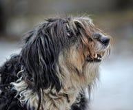 Terrier do cão do híbrido foto de stock royalty free