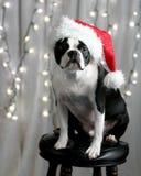 Terrier do Natal Fotografia de Stock Royalty Free