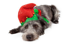 Terrier Dog Christmas Elf Laying Royalty Free Stock Photography
