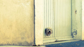 Terrier dog pokes its head through small trapdoor in garage door Royalty Free Stock Photography