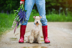 Terrier dog sitting next to a girl in rubber boots on a country road. Lakeland terrier dog sitting next to a girl in jeans and red rubber boots with a bouquet of royalty free stock photography