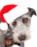 Terrier Dog Wearing Santa Hat In Snow Royalty Free Stock Images