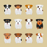 terrier dogs coloring variations Royalty Free Stock Images