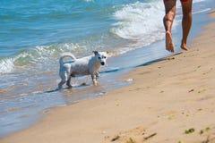 Terrier en eigenaar Royalty-vrije Stock Afbeelding