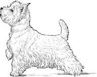 Terrier escocés Fotos de archivo