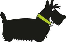 Terrier escocês do filhote de cachorro Fotografia de Stock