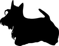 Terrier escocês preto Fotos de Stock Royalty Free