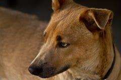 Terrier Stock Photos