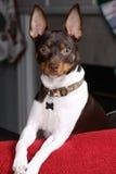 Terrier feliz fotografía de archivo