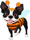 Terrier Halloweens Boston Lizenzfreies Stockfoto
