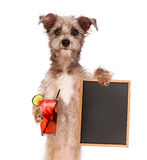 Terrier Holding Drink and Sign Royalty Free Stock Photography