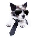 Terrier-hond Stock Afbeelding
