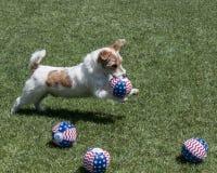 Terrier-hond met ballen Royalty-vrije Stock Afbeelding
