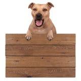 Terrier-Hund, der mit den Tatzen auf dem leeren hölzernen fördernden Brettzeichen, lokalisiert auf weißem Hintergrund hängt stockfotos