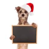 Terrier hund med Santa Hat och tecknet Arkivbild