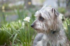 Terrier i trädgård royaltyfria bilder