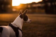 Terrier im Park lizenzfreie stockfotos