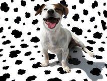 Terrier JRT de Gato Russell en lona de la vaca imagen de archivo libre de regalías