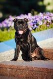 Terrier lindo del perro que se sienta en fondo de las flores Imágenes de archivo libres de regalías
