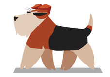 Terrier minimalist image Royalty Free Stock Photography