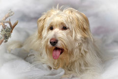 Terrier métis Photo stock