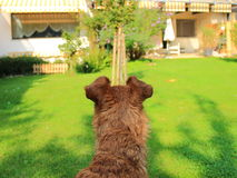 Terrier observes the property Stock Photos