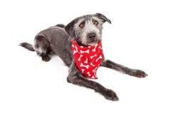Terrier pies kłaść będący ubranym czerwone kości bandany Fotografia Royalty Free
