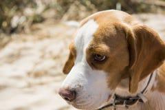 Terrier-puppy op de lente zonnige achtergrond Grote details! royalty-vrije stock foto