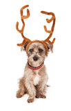 Terrier Puppy With Reindeer Antlers Stock Images