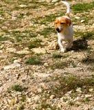 Terrier-Ranchhund lizenzfreie stockfotografie