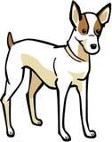 terrier russell jack бесплатная иллюстрация