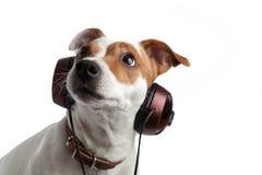 Terrier słucha muzyka na hełmofonach Zdjęcia Stock