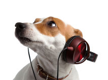 Terrier słucha muzyka na hełmofonach Obraz Royalty Free