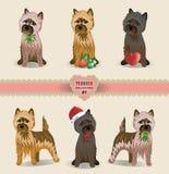 Terrier samling Royaltyfria Foton