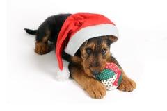 terrier santa шлема Стоковые Изображения