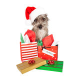 Terrier Santa Dog With Presents Royalty Free Stock Image