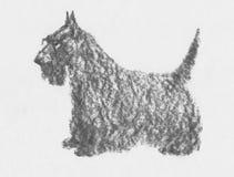 Terrier scozzese Fotografia Stock