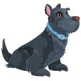 Terrier scozzese Fotografie Stock Libere da Diritti