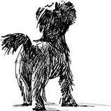 Terrier sketch Royalty Free Stock Photography
