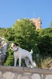 Terrier vigilante que guarda la casa fotografía de archivo libre de regalías