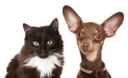 Terrier y gato rusos de juguete. Foto de archivo