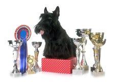 Terrier y trofeo escoceses imagenes de archivo