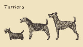 Terriers illustration Stock Image