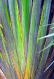 ABSTRACT- Background Close Up of a Beautiful Travellers Palm royalty free stock photos